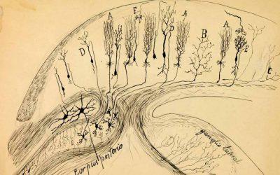 Archivos de Cajal y de su Escuela
