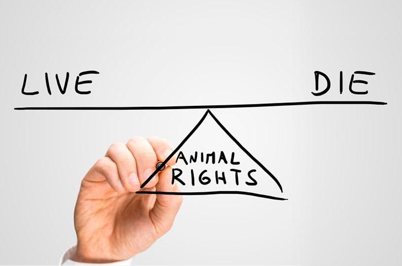 ¿Qué haría antes estos dilemas éticos?
