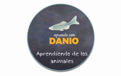 """Solicita el vídeo gratuito """"Aprendiendo de los animales"""""""