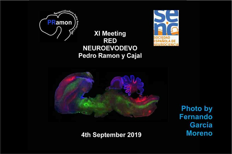 XI Meeting of the Red NeuroEvoDevo Pedro Ramón y Cajal