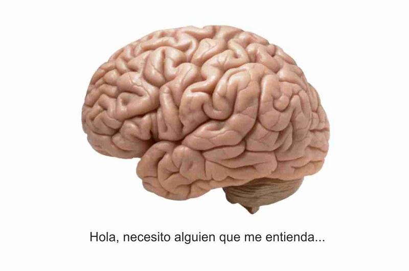 Hablando de lo que entiende: el cerebro en vivo y en directo