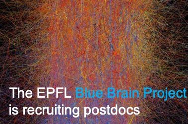 Post-doctoral Position at the Blue Brain Project (EPFL)