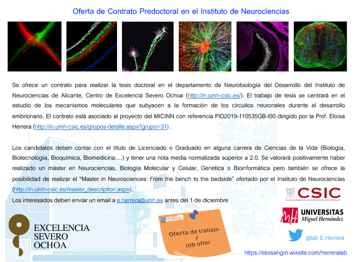 Oferta de Contrato Predoctoral en el Instituto de Neurociencias
